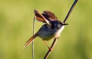 लॉकडाउन के बीच हल्द्वानी में खूबसूरत पंछियों की आवाजाही