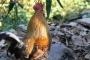लॉकडाउन में गाँव लौटे शेफ प्रकाश दा की चिकन बिरयानी