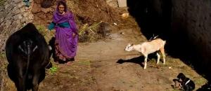 Diseases of animals in Uttarakhand