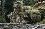 संकल्प : पहाड़ी घसियारिनों की कहानी