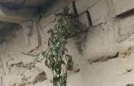 सावन के महीने देवता कैलाश में जुआ या अन्य बाजियां लगाते हैं : सीमांत की अनूठी मान्यता