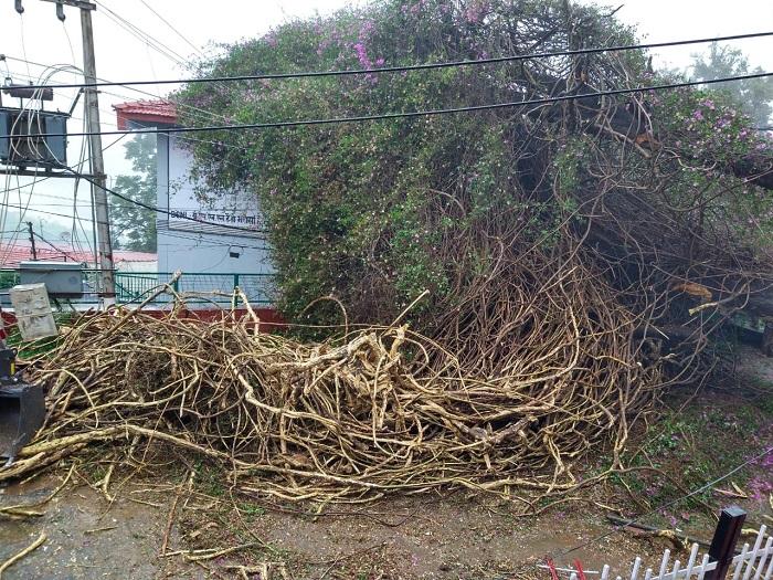 Almora Mll Road Bougainvillea Fall Down