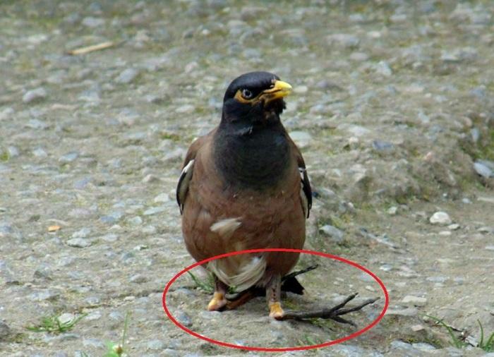 Unknown bird disease in nainital