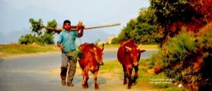 Baudhan God of animals