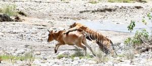 Man Animal Conflict in Uttarakhand