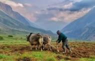 दुनिया के चलते रहने के लिए जरूरी है खेतों में हल चलता रहे