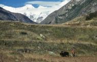जोहार घाटी की जीवनदायिनी जड़ी-बूटियां और खुशबूदार मसाले