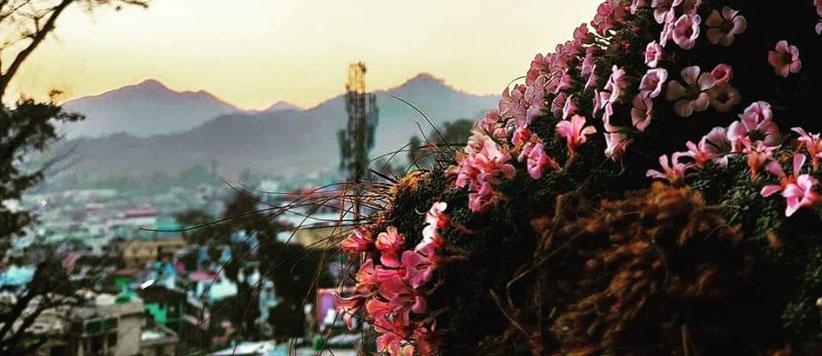 पहाड़ के फूलों की सुगंध संग देश में कहीं भी मना सकते हैं होली