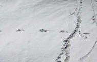उत्तराखंड में हिम मानव 'येति' के निशान