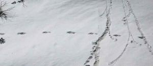 Yeti in Uttarakhand