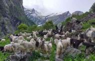 सीमांत हिमालय के अनवाल