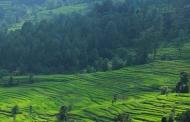 उत्तराखंड की जमीन और जमीर को बचा सकती है चकबंदी