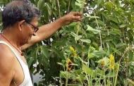 पौधों से एक बुजुर्ग का अजब प्रेम