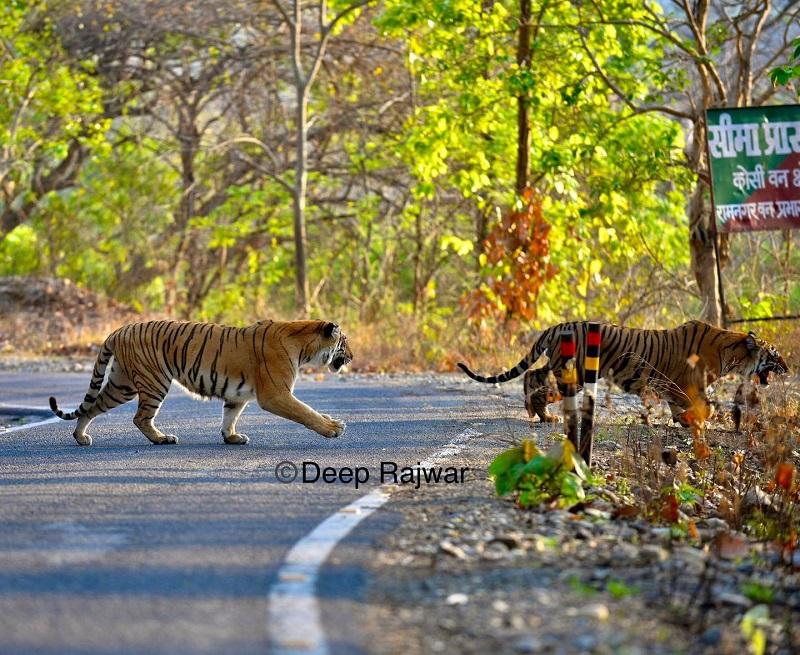 Memoirs of Corbett Park by Deep Rajwar
