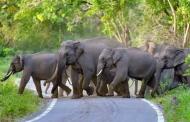 विश्व हाथी दिवस के मौक़े पर जानते हैं इनके बारे में