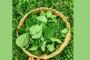 बिच्छू घास की पत्तियों को 5000 से 9000 रुपये तक की रकम चुकाकर क्यों खरीदते हैं लोग
