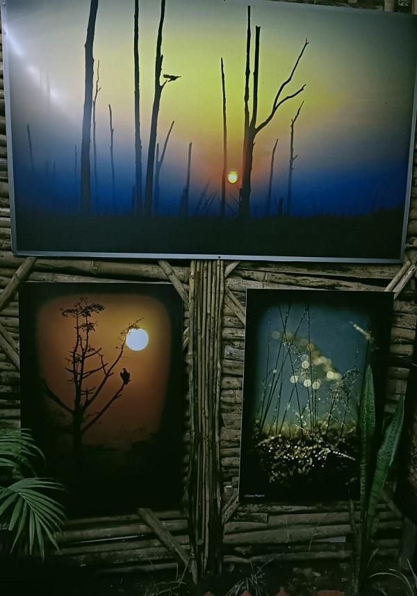 Wildlife Art Gallery